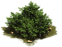 D_SS_BronzeAge_Hedge-e5aaabe7b.png